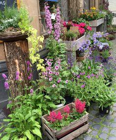 Container Plants, Ash, Garden Ideas, Home And Garden, Corner, Gardening, Flowers, House, Gardens