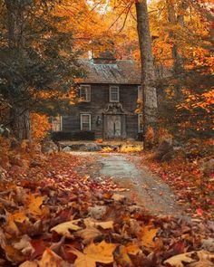 Cabin In The Woods, Autumn Scenes, Autumn Aesthetic, Autumn Cozy, Autumn Forest, Second Empire, Creepers, Fall Halloween, Vermont