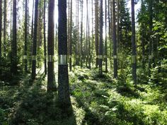 """Joakim Kaminsky and Maria Poll. Installation in the Medelpad forest north of Sweden. """"Clear Cut."""""""