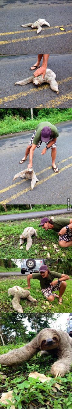 My friend saved a sloth from the middle of the road