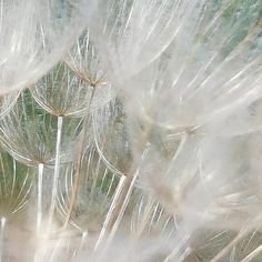 Today I had to visit these again and I sat down for a while. I took about 100 pictures of these and… Take My, Miraculous, Dandelion, Seeds, Flowers, Plants, Pictures, Instagram, Nature Photography