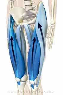 Synchronization of quadriceps and IT band) 28. tadasana_step3