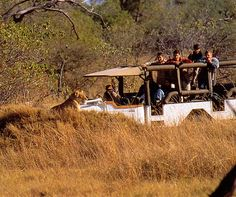 5 Days Zimbabwe and Victoria Falls Fly – In Tour Chobe National Park, Kruger National Park, Victoria Falls, Big 5, Adventure Activities, Luxury Accommodation, Top Destinations, Once In A Lifetime, Canoeing