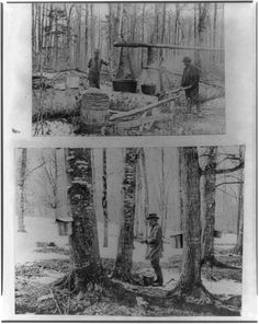 Vintage Maple Sugaring Photos from the Library of Congress | Modern Farmer