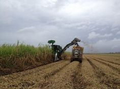 Times-Picayune article on 2012 sugarcane crop from Juliet Linderman. Juliet attended the field tour I arranged.