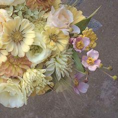 sun is shining today!  #magicwand #flowerfarmer #rhodeisland