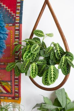 Foliage Plants - Indoor House Plants   Apartment Therapy #indoorhouseplantsleaves