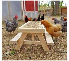 Backyard Chicken Coop Plans, Chicken Garden, Chicken Life, Chicken Runs, Chickens Backyard, Chicken Coop Pallets, Chicken Houses, Cute Chicken Coops, Chicken Feeders