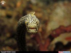 garden eel Underwater Images, Salt And Water, Marine Life, Turtle, Aquariums, Animals, Garden, Underwater, Tanked Aquariums
