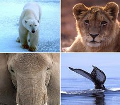 SPEAK UP!  Tell President-elect Trump to tackle climate change!  The unmerciful effects of climate change are already threatening so many animals! If we don't act now, things could get much worse!  Please Sign and Share Widely!