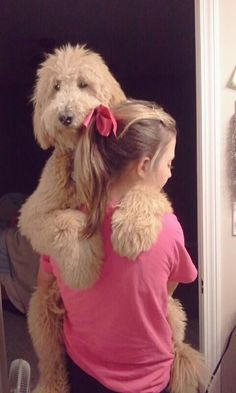 Goldendoodle = Teddy bear. I wish I could hold Sunny (my goldendoodle) but she is it to big :P