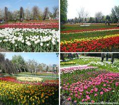 Parque Britzer Garten (Clique na imagem para ampliar)