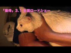 玉之丞さまの猫萌え動画11―映画「猫侍」メイキング - YouTube 【玉之丞さまの猫萌え動画更新】Vol.11は「美白の玉之丞」。屋外の撮影後、玉之丞さまをふきふき。白猫は美白が命。 Kittens Cutest, Neko, Cats, Videos, Youtube, Animals, Gatos, Animales, Animaux
