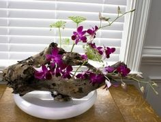 mounting-orchids-3