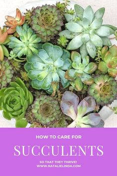 Succulents are beautiful plants that can thrive indoors if you know what they need to thrive. Learn how to care for succulents so you can grow them in pretty pots alongside your other indoor plants! Types Of Succulents Plants, Growing Succulents, Faux Plants, Planting Succulents, Propagating Succulents, Succulent Gardening, Succulent Care, Container Gardening, Succulent Plants