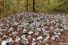 Tiroler Herbst im Wald der Wolfsklamm