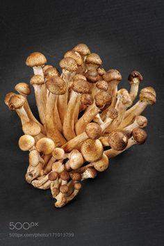 Fresh forest edible mushrooms by Belkantus  IFTTT 500px