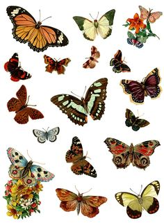 Several pages of free printable butterfly images: Dover Publications