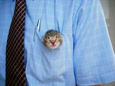 Pint-sized pocket protector (comes with teefs, in case someone tries to take your pens....)