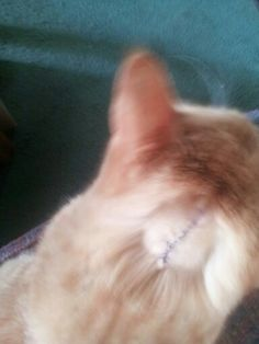 Dozer had to have a tumor removed...This is his stitch line :(