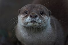 Otter sits still for a photo - January 7, 2015