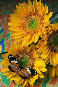 Orange Black Butterfly And Sunflowers Photograph - Orange Black Butterfly And Sunflowers Fine Art Print. Do you believe in signs? The other day I was sitting first in line at a crowded intersection and a huge butterfly flies right in front Happy Flowers, Beautiful Flowers, Sun Flowers, Beautiful Gorgeous, Summer Flowers, Yellow Flowers, Orange And Black Butterfly, Sunflowers And Daisies, Images Of Sunflowers