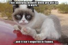 Grumpy cat jokes, grumpy cat quotes, funny grumpy cat quotes, grumpy cat funny, funny grumpy cat …For more hilarious humor and funny pics visit www. Grumpy Cat Quotes, Funny Grumpy Cat Memes, Funny Cats, Funny Memes, Hilarious, Angry Cat Memes, Cat Jokes, Funny Quotes, Animal Jokes