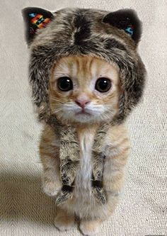 Kitten wearing a hat