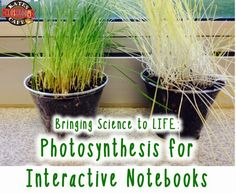 Photosynthesis activities for interactive notebooks.  Organizing science content in easy to understand chunks.  Kate's Classroom Cafe