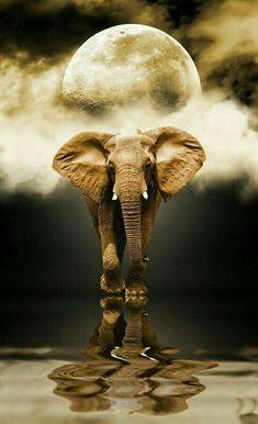 Reflection # Mirroring # Mirror # Spirit Animal # Animal Spirit # Spirit Guide # Obstacle Breaker # Elefant # Elefantastic # Ganesh # Ganesha # Jahnesh # Jahnesha # Jah We Elephant Pictures, Elephants Photos, Save The Elephants, Animal Pictures, Nature Pictures, Elephant Love, Elephant Art, African Elephant, African Animals