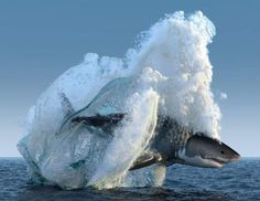 Great White Shark in South Africa - 9GAG