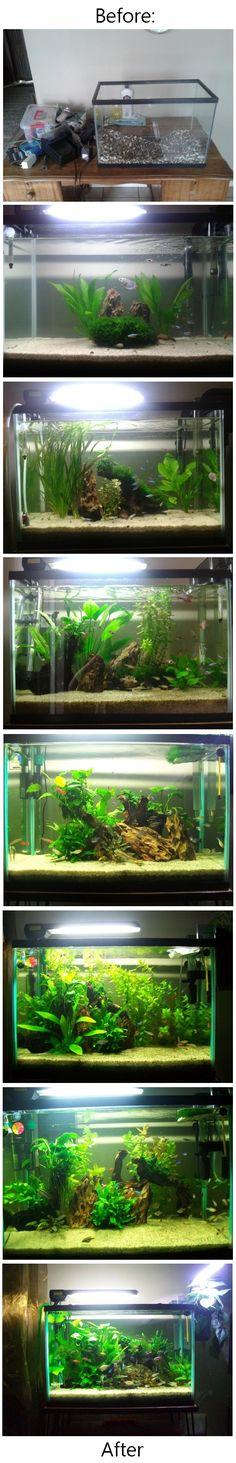 The evolution of my tropical fish tank setup.