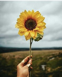 Image shared by Kylie. Find images and videos about flowers and sunflower on We Heart It - the app to get lost in what you love. Planting Sunflowers, Sunflowers And Daisies, Growing Sunflowers, Sunflower Garden, Sunflower Art, Flower Power, Sunflower Pictures, Blossom Garden, Sunflower Wallpaper