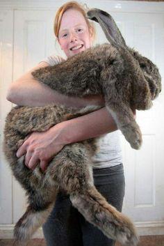Big bunny,,,,,,,AMAZING,and BEAUTIFUL