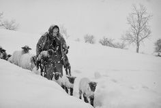 Untitled photo by Cornel Pufan ~ can't help by notice the sheperd carrying the lambs in the storm