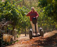 segway down the vines.