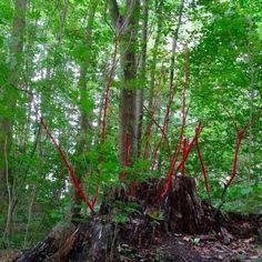 Am I still alive? Environmental Art, Land Art, Germany, Wood, Artist, Nature, Plants, Naturaleza, Woodwind Instrument