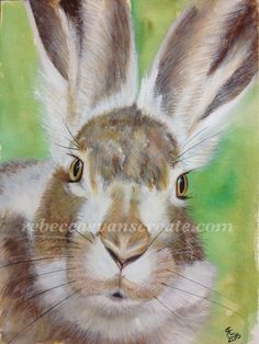 I have finally finished this watercolour hare after 4 months. He has been sat on the side half complete, waiting for me to consider finishing, today was the day.