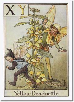 Cicely Mary Barker - A Flower Fairy Alphabet - The Yellow Deadnettle Fairy Archival Fine Art Paper Print