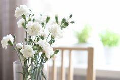 ~carnations~