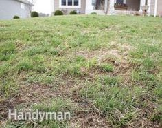 It's SPRING! Time to take a look at our lawns! How to repair lawns like this!