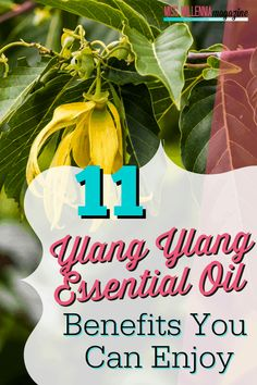 Ylang Ylang is known for alleviating negative emotions while relaxing the body. But are these the only Ylang Ylang essential oil benefits? Essential Oils For Depression, Essential Oils Room Spray, Essential Oils For Anxiety, Essential Oils Cleaning, Best Essential Oils, Oil Benefits, Health Benefits, Health Tips, Health And Wellness