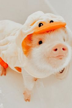 Cute Wild Animals, Baby Animals Super Cute, Baby Animals Pictures, Cute Little Animals, Cute Animal Pictures, Cute Funny Animals, Animals Beautiful, Cute Baby Pigs, Cute Piglets
