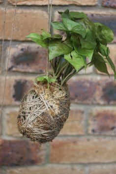 stringplants.com | DIY : : Kokedama : : Hanging string plants - My Little Sunshine House