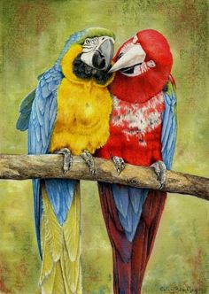 How To Draw Parrots using Pastel Pencils: http://www.colinbradleyart.co.uk/home/sign-up/