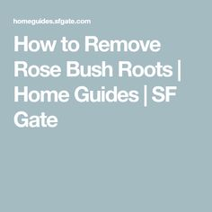 How to Remove Rose Bush Roots Bush Plant, Patio Plants, Rose Bush, Green Garden, Curb Appeal, Gate, Roots, Gardening, Flowers