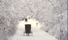 Old Order Amish in Holmes County~♥~