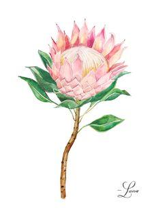 Illustrated King Protea Print by LanasShop on Etsy Botanical Wedding, Botanical Flowers, Botanical Prints, Flor Protea, Protea Flower, Watercolor Plants, Floral Watercolor, Watercolor Paintings, African Drawings