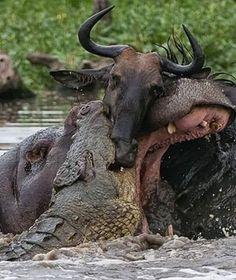 Animal Action, Moose Art, Animals, Animales, Animaux, Animal, Animais, Dieren