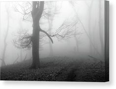 Mysterious forest Canvas Print by Ren Kuljovska.  All canvas prints are professionally printed, assembled, and shipped within 3 - 4 business days and delivered ready-to-hang on your wall. Choose from multiple print sizes, border colors, and canvas materials.  #mistyforest #scarytree #canvasprint Wall Art Decor, Wall Art Prints, Canvas Prints, Fine Art Photography, Landscape Photography, Misty Forest, Nature Artists, Fine Art America, Cool Photos